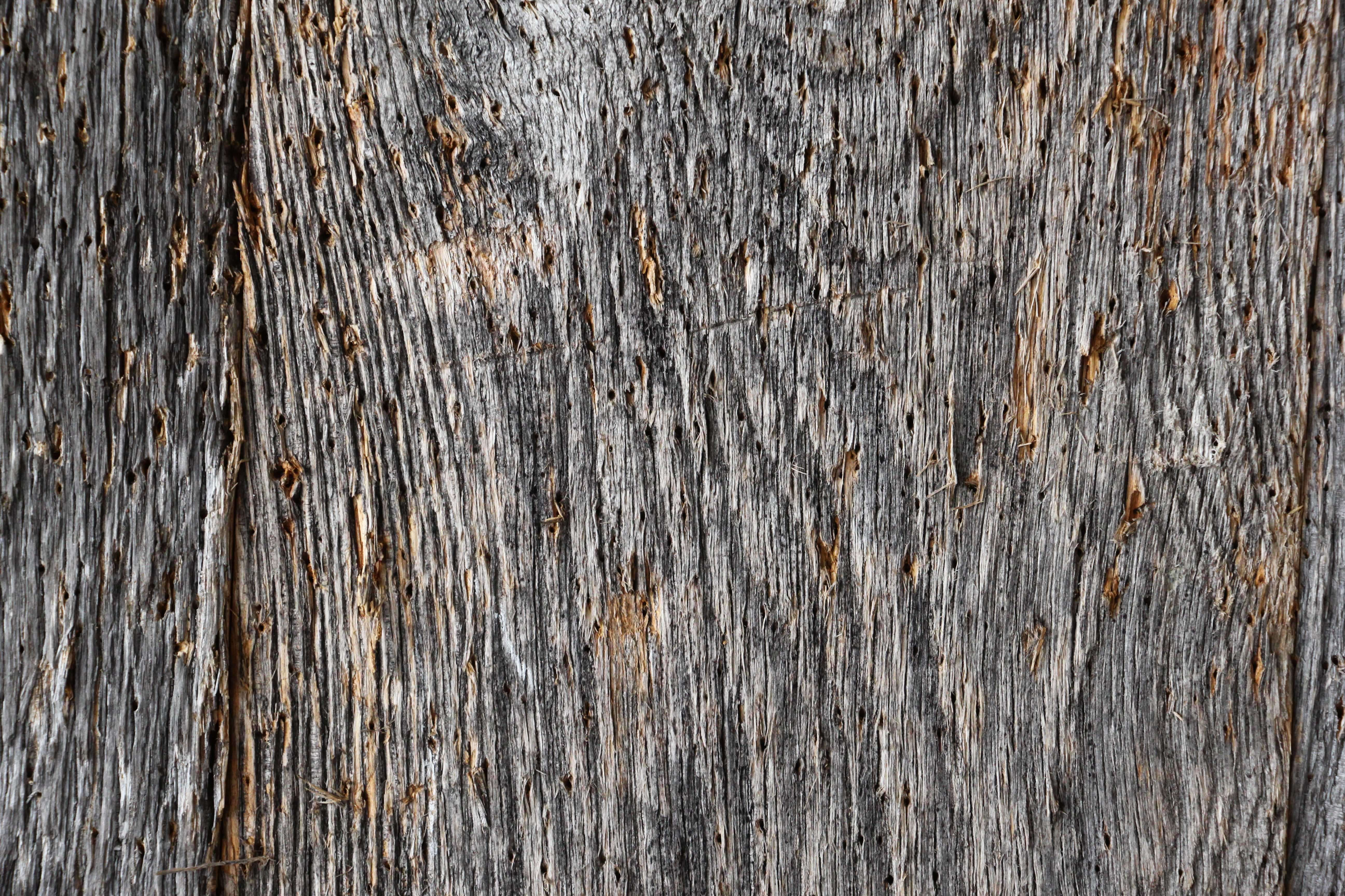 Wood Texture Trunk Of Tree Canada Texture X